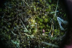 Moss and cladonie deep in the forest royalty free stock image