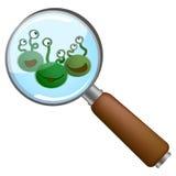 Microben onder loupe Stock Foto's