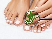 Microbes sur des expositions de jambes femelles par mygnifying le verre Images stock