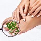 Microbi sulle manifestazioni di gambe femminili mygnifying vetro Fotografie Stock Libere da Diritti