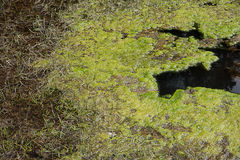 Microbial mat Stock Images