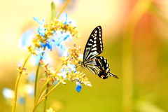 Microbial / plant  butterfly Royalty Free Stock Photos