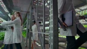 Microbiologia in camice che camminano su un'azienda agricola moderna con i computer portatili e le compresse che studiano e che d stock footage