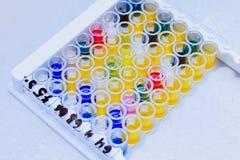 Microbiologisch laboratorium Vorm en schimmelculturen Bacterieel onderzoek stock afbeeldingen