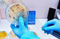 Microbiologisch laboratorium Vorm en schimmelculturen Bacterieel onderzoek stock fotografie