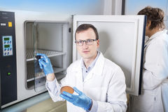 Microbiologist hand cultivating a petri dish whit inoculation loops, beside autoclave. Royalty Free Stock Photography