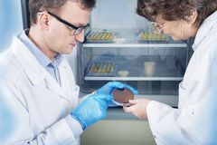 Microbiologist hand cultivating a petri dish whit inoculation loops, beside autoclave. Royalty Free Stock Images
