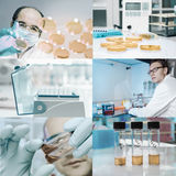 Microbiologists work in modern laboratory Royalty Free Stock Images