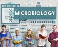MicroBiology Bacteria Disease Illness Laboratory Concept Stock Photo