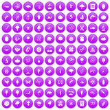 100 microbiology icons set purple. 100 microbiology icons set in purple circle isolated vector illustration Royalty Free Stock Images