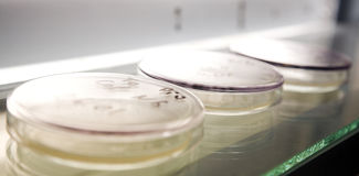 Microbiology science. Laboratory workplace for creating modern transgenic plants royalty free stock photo