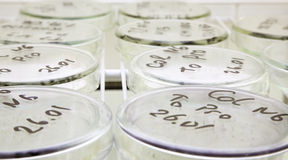 Microbiology science. Laboratory workplace for creating modern transgenic plants stock image