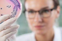 Microbioloog die een petrischaal met bacteriën houden Stock Foto