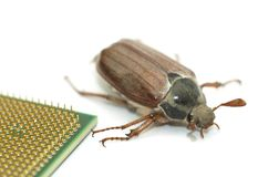 Microchip bug Stock Photo