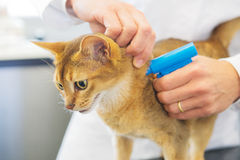 Microchip implant by cat Stock Image