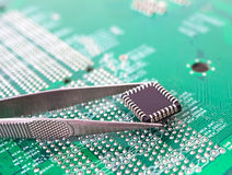 Microchip in the tweezers. On the background of the motherboard stock image