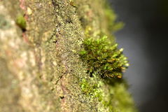 Microcosm: beautiful moss on the bark of a tree. stock image