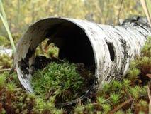 Microcosmos en la naturaleza siberiana fotos de archivo