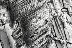 Microcrystals de sulfate d'ammonium Photos libres de droits