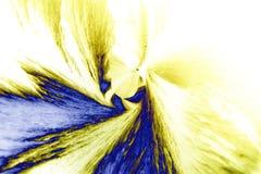Microcrystals del ácido tartárico en luz polarizada fotografía de archivo libre de regalías