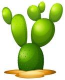 Microdasy vijgencactus Royalty-vrije Stock Fotografie
