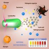 Microflora vaginal saudável ilustração do vetor