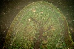 Micrograaf van kleine intestinum Royalty-vrije Stock Afbeeldingen