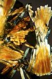Micrografia abstrata do tecido de um milípede, com polarização foto de stock royalty free