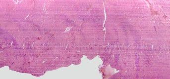 Micrografia del cuore Immagine Stock Libera da Diritti