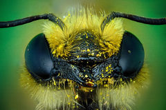 Micrograph of the head of a bee Royalty Free Stock Photos