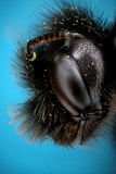 Micrograph of the head of a bee Royalty Free Stock Photo