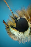Micrograph of the head of a butterfly Stock Photography