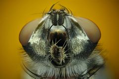 Micrograph of the head of a fly Royalty Free Stock Photos