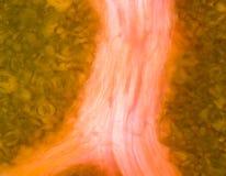 Micrograph zielony liść z oddychanie komórek stomata Fotografia Stock