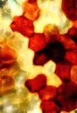 Micrographe abstrait, audacieux, coloré des modèles dans un indusi de fougère photographie stock libre de droits