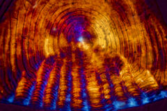 Micrographe abstrait coloré d'une échelle de poissons photos libres de droits