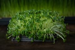 Microgreen Image stock