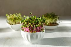 Microgreen kress, pink radish sprouts on white wooden background in trendy hard direct sunlight, deep shadows, copy space. Vegan, vegetarian, healthy eating royalty free stock images