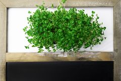 A microgreen is a young vegetable green. A microgreen or Sprouts are raw living sprout vegetables germinated from high quality. Organic plant seeds with copy stock images