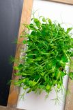 A microgreen is a young vegetable green. A microgreen or Sprouts are raw living sprout vegetables germinated from high quality. Organic plant seeds with copy stock image