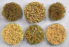 Microgreens, οργανική τροφή Στοκ εικόνες με δικαίωμα ελεύθερης χρήσης