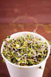 Microgreens assortment in paper cup. Healthy Green Salad with fresh raw sprouts Royalty Free Stock Photos