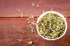 Microgreens assortment in paper cup. Healthy Green Salad with fresh raw sprouts Royalty Free Stock Photo