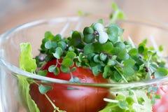 Microgreens freschi del cavolo in un'insalata di verdure Fotografia Stock Libera da Diritti