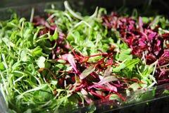 Microgreens lindo Imagens de Stock