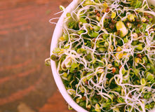 Microgreens sortiment i pappers- kopp Sund grön sallad med nya rå groddar royaltyfri fotografi