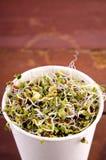 Microgreens sortiment i pappers- kopp Sund grön sallad med nya rå groddar royaltyfria foton