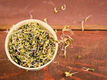 Microgreens sortiment i pappers- kopp Sund grön sallad med nya rå groddar royaltyfri foto