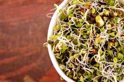 Microgreens sortiment i pappers- kopp Sund grön sallad med nya rå groddar royaltyfria bilder