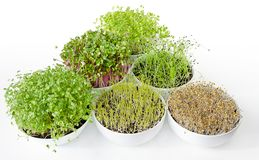 Microgreens and sprouts triangle in white bowls royalty free stock image